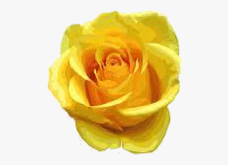 Transparent flower rose yellow clipart clipart transparent download Yellow Rose Clipart One Single - Yellow Flowers Rose ... clipart transparent download