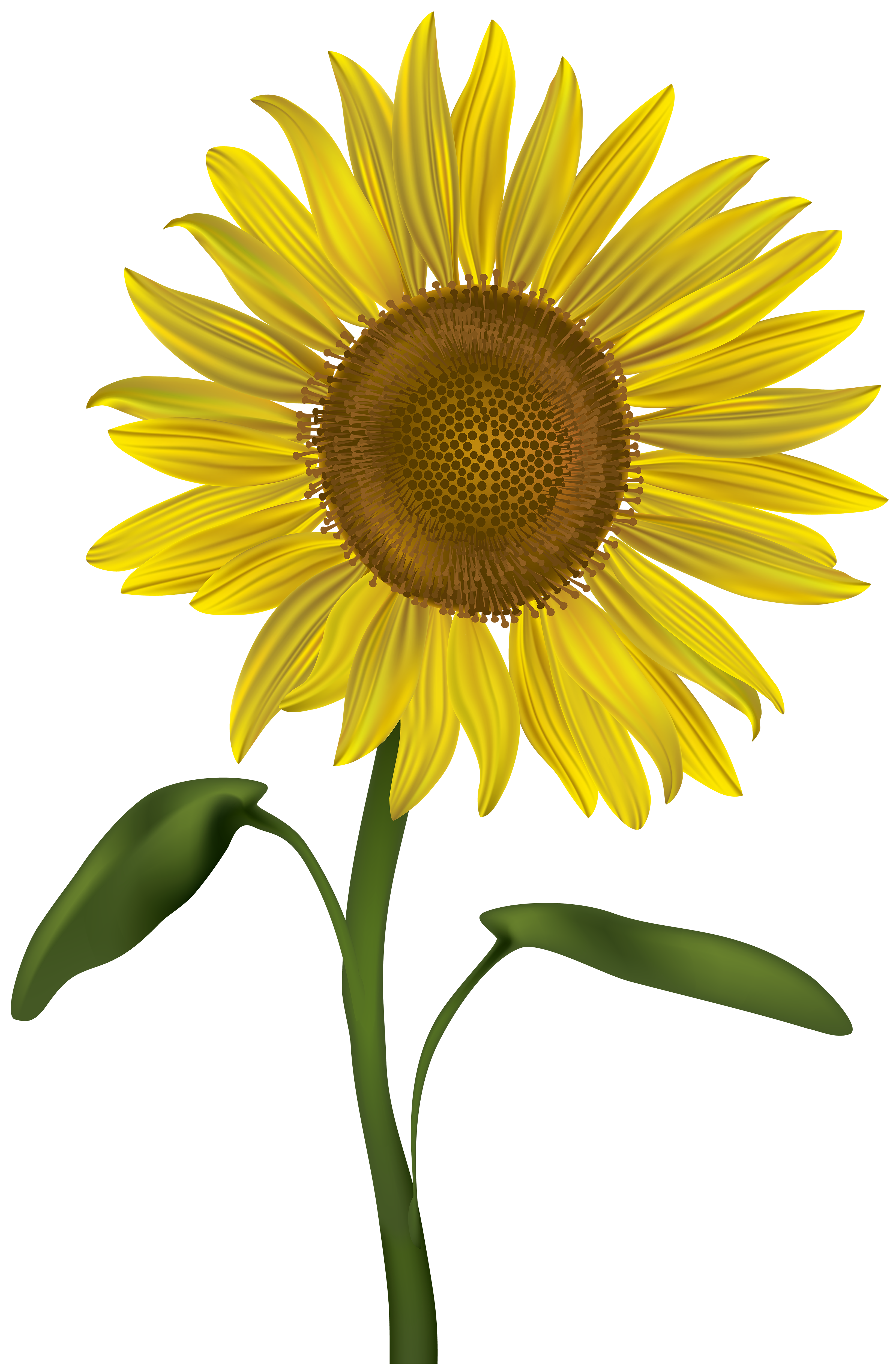 Flower seed clipart jpg free stock Sunflower Transparent PNG Clip Art Image | Gallery Yopriceville ... jpg free stock