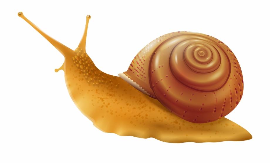Transparent snail clipart clip free Snail Png Clip Art - Transparent Background Snail Clipart ... clip free