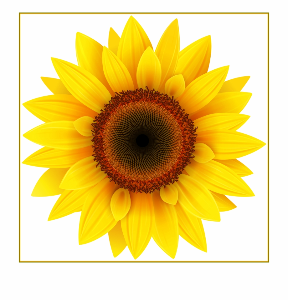Transparent sunflower clipart clip art transparent Sunflowers Png Flower Garden - Sunflower Transparent Free ... clip art transparent