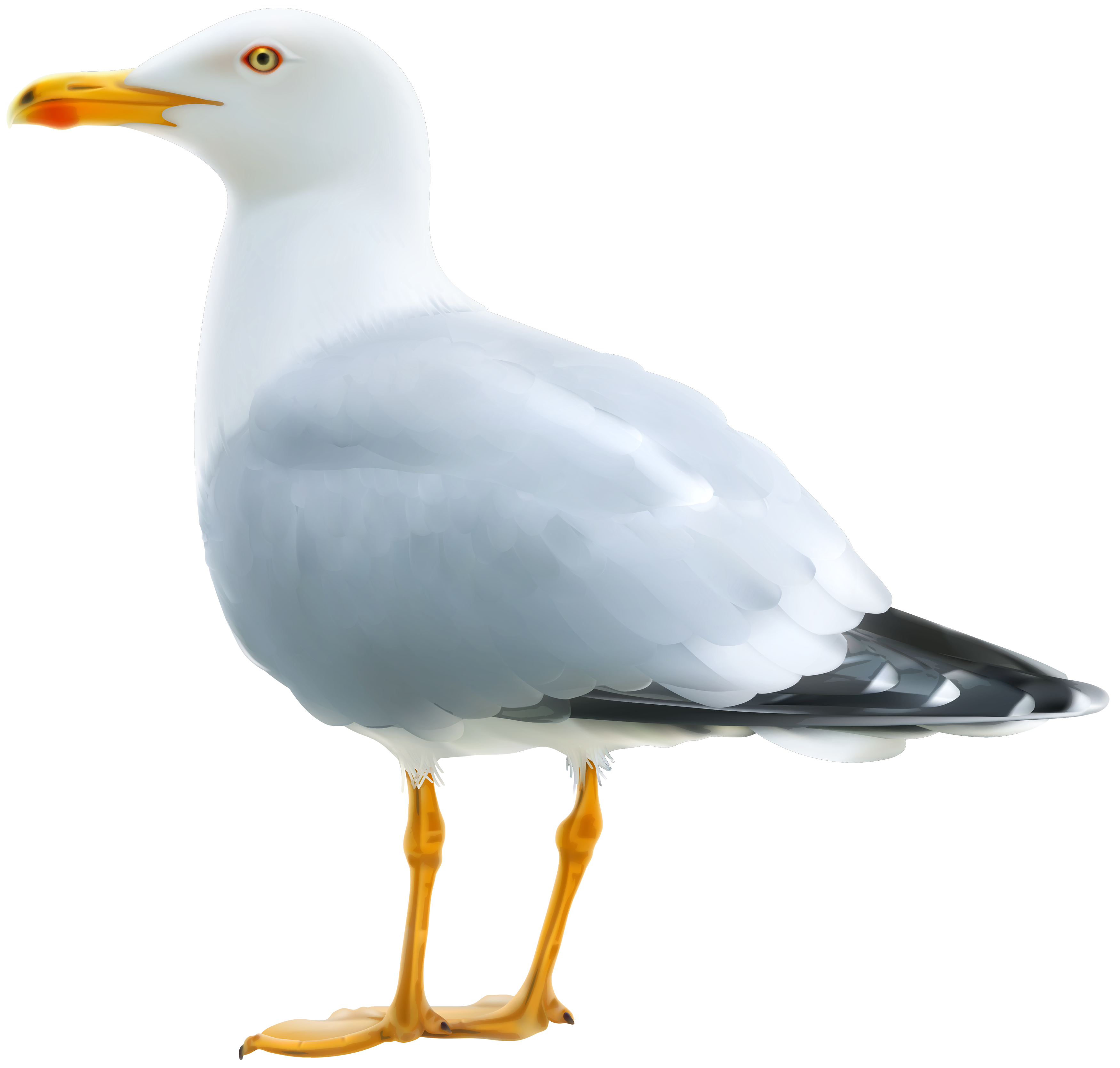 Transparent western star clipart png stock Seagull PNG Clipart Image | Gallery Yopriceville - High-Quality ... png stock