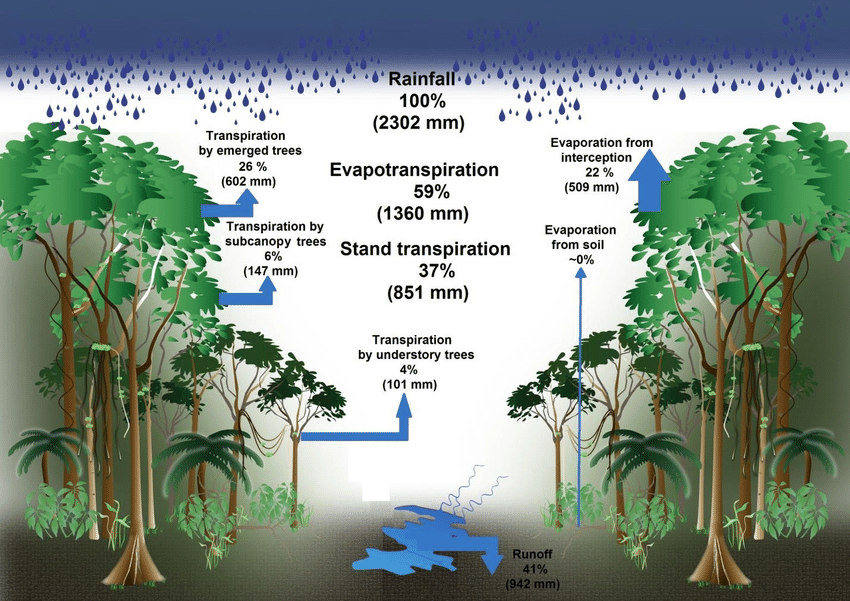 Transpiration trees and hills clipart vector transparent Water balance of the terra firme forest of the present study ... vector transparent