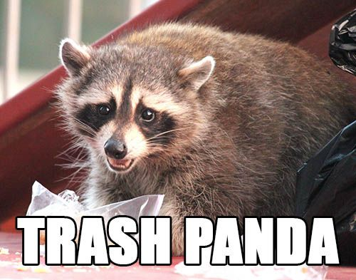 Trash panda picture library A Guide to Imgur Animal Names - Raccoon = Trash Panda | Comics and ... picture library