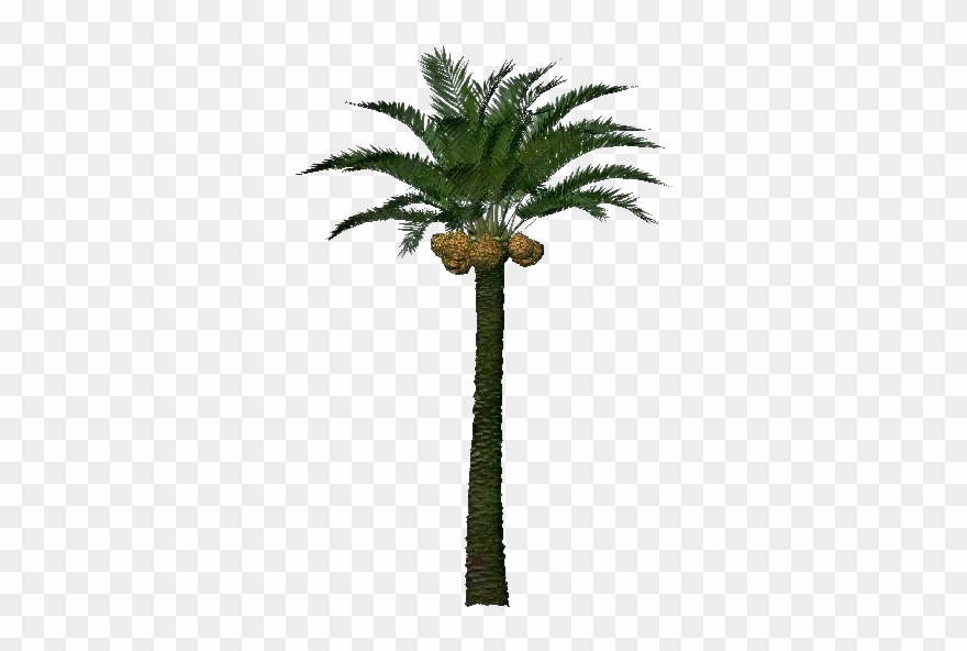 3d Coconut Tree Png Download - Palm Tree Fruit 3d Clipart ... image black and white library