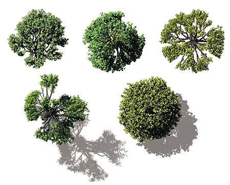 Tree birds eye view clipart clip art royalty free download birds eye view of blossom tree - Google Search | photoshop ... clip art royalty free download