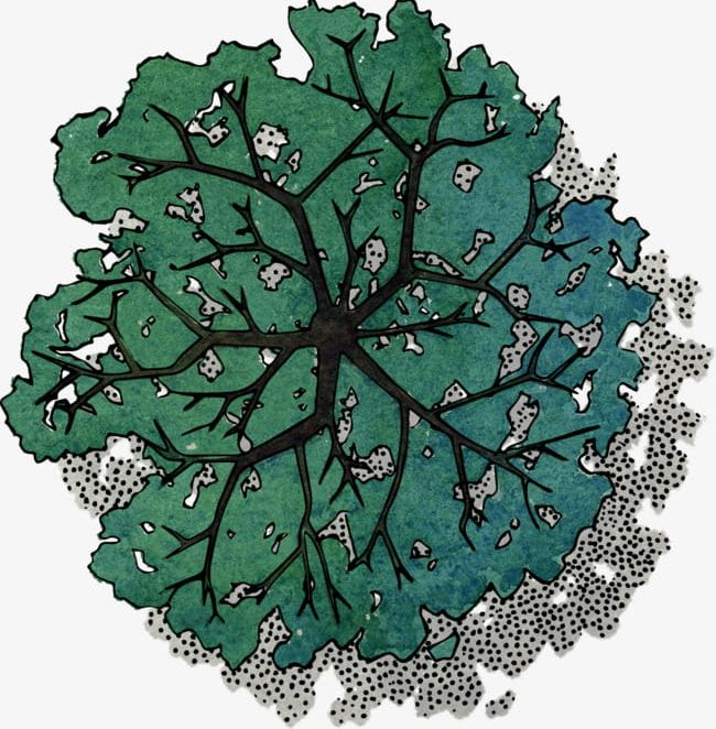 Tree birds eye view clipart image library library Green Tree Top View PNG, Clipart, Birdseye View, Color ... image library library
