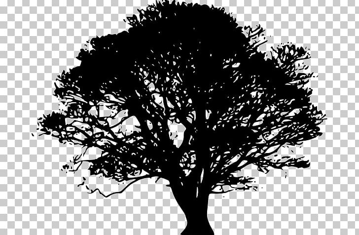 Tree black clipart picture transparent library Tree Silhouette Oak PNG, Clipart, Black, Black And White ... picture transparent library