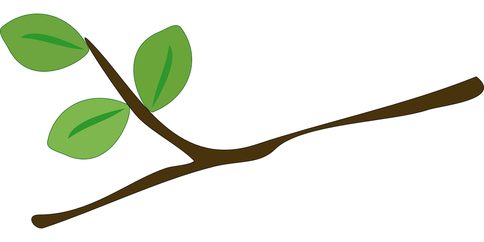 Tree climbing clipart graphic free Cartoon Tree With Branches#4465827 - Shop of Clipart Library graphic free