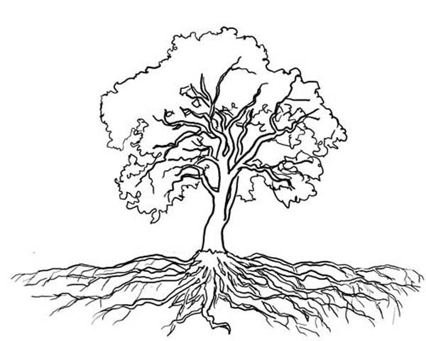 Tree clipart black and white with roots image free Roots Clipart Tree Outline – Pencil And In Color Roots ... image free