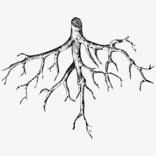 Tree clipart black and white with roots png free Free Tree With Roots Clipart Black And White Cliparts ... png free