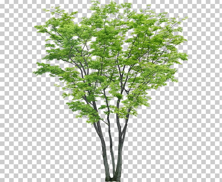 Portable Network Graphics Tree Psd Adobe Photoshop File ... png transparent stock