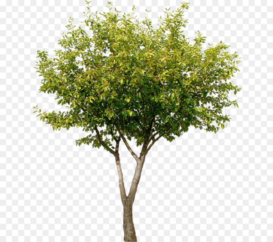 Family Tree Background clipart - Tree, Plant, Leaf ... image library library