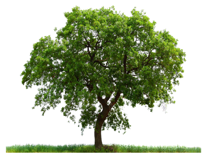 Transparent Tree Png Vector, Clipart, PSD - peoplepng.com svg freeuse download