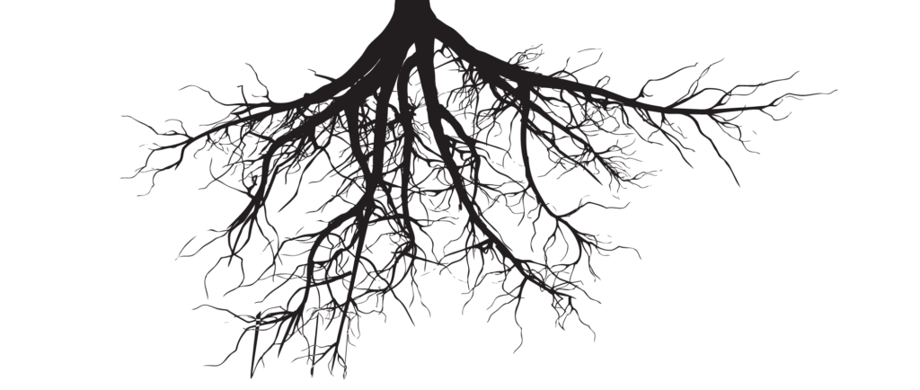Tree clipart roots svg freeuse download roots-1024x434.png (1024×434) | Drawings of Trees | Pinterest | Logo ... svg freeuse download