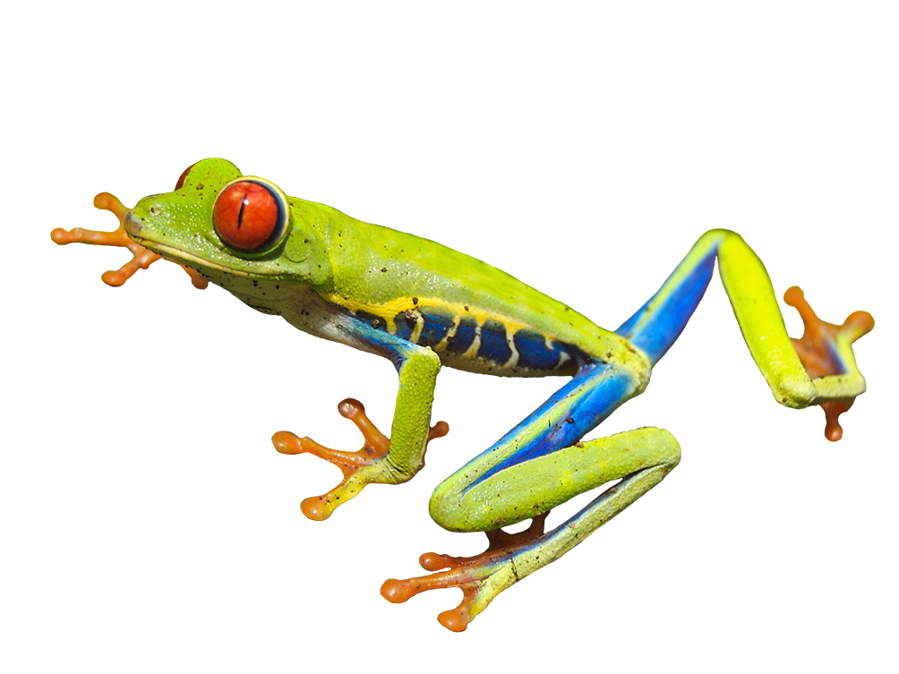Tree frog from above clipart image stock Frog Clip Art image stock