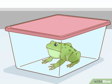 3 Ways to Care for Green Tree Frogs - wikiHow clipart black and white library