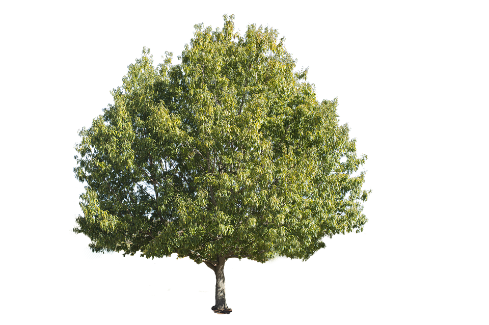 Tree hill clipart png library Tree#4073795 - Shop of Clipart Library png library