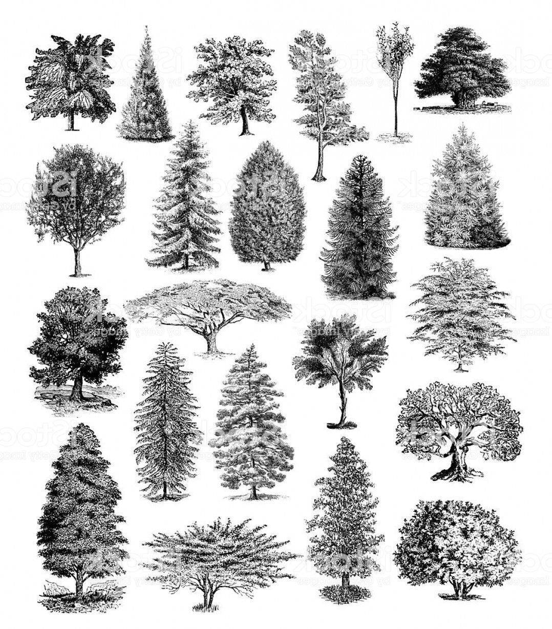Tree illustrations clipart clip art royalty free Forest Tree Illustrations Vintage Nature Clipart Gm | SOIDERGI clip art royalty free