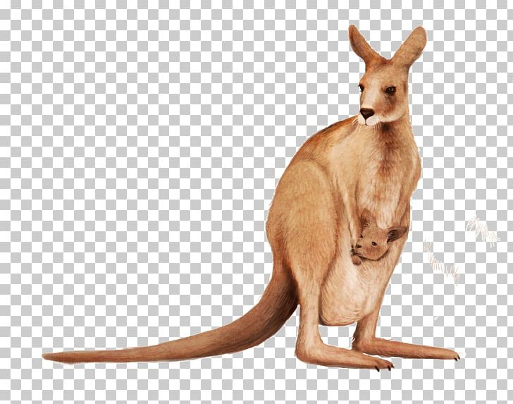 Matschie\'s Tree-kangaroo Wallaby Reserve PNG, Clipart, Free ... banner library stock