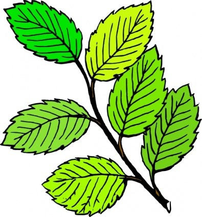 Tree leaves images clipart jpg transparent Plant leaves clipart » Clipart Portal jpg transparent