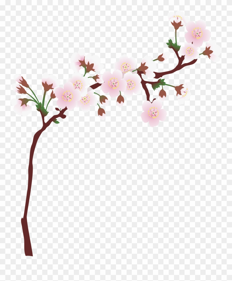 Tree limb with flowers clipart transparent background clipart Graphic Library Download Branch Transparent Spring - Cherry ... clipart