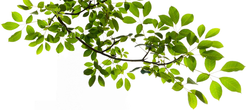 Tree limb with flowers clipart transparent background clipart transparent library Tree Limb PNG Transparent Tree Limb.PNG Images. | PlusPNG clipart transparent library