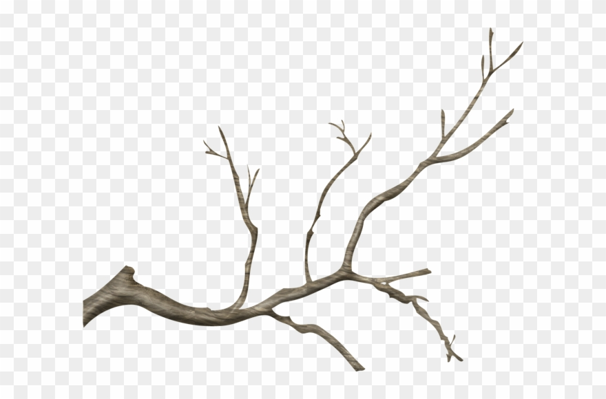 Tree limb with flowers clipart transparent background png library stock Jpg Free Stock Branch Transparent Tree Limb - Real Tree ... png library stock