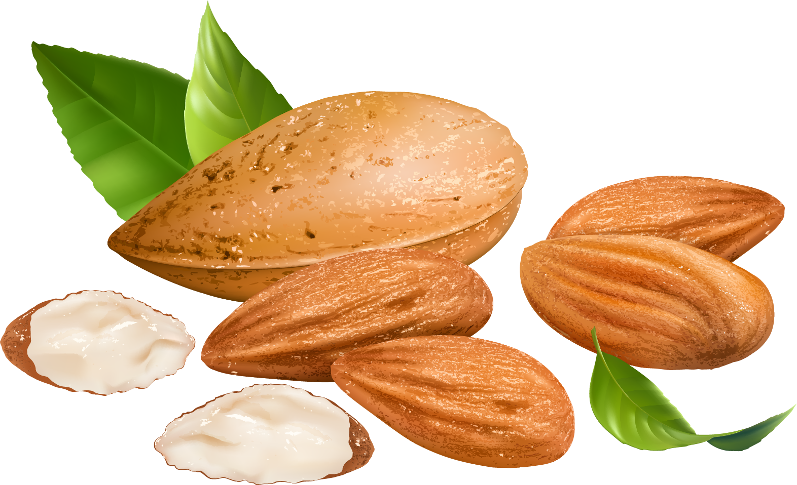 Almond PNG Transparent Free Images | PNG Only banner download