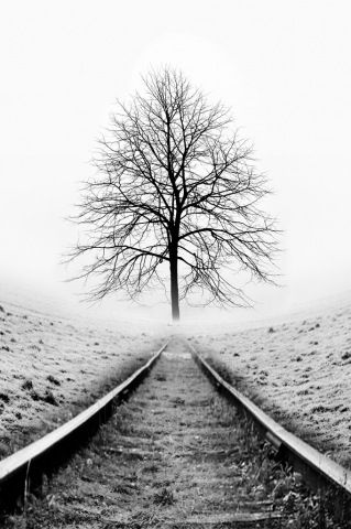 Tree on hill black and white far away clipart clipart black and white library Digital Macro Photography | hue | Black, white tree, Black ... clipart black and white library