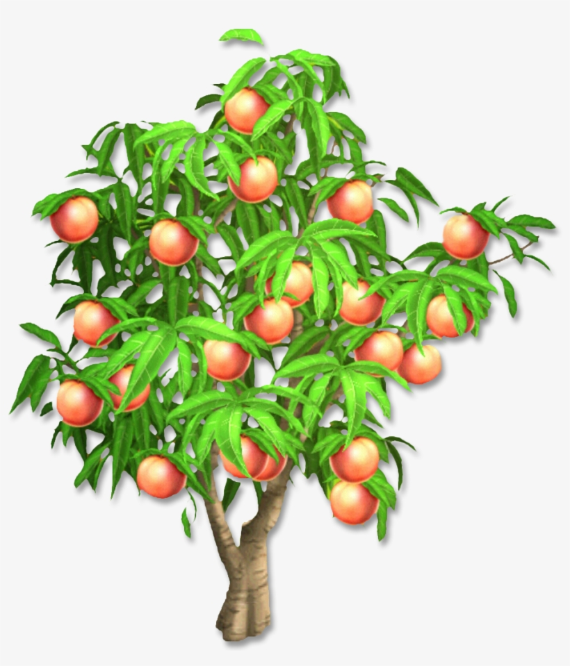 Peach Tree - Hay Day Peach Tree - Free Transparent PNG ... vector royalty free