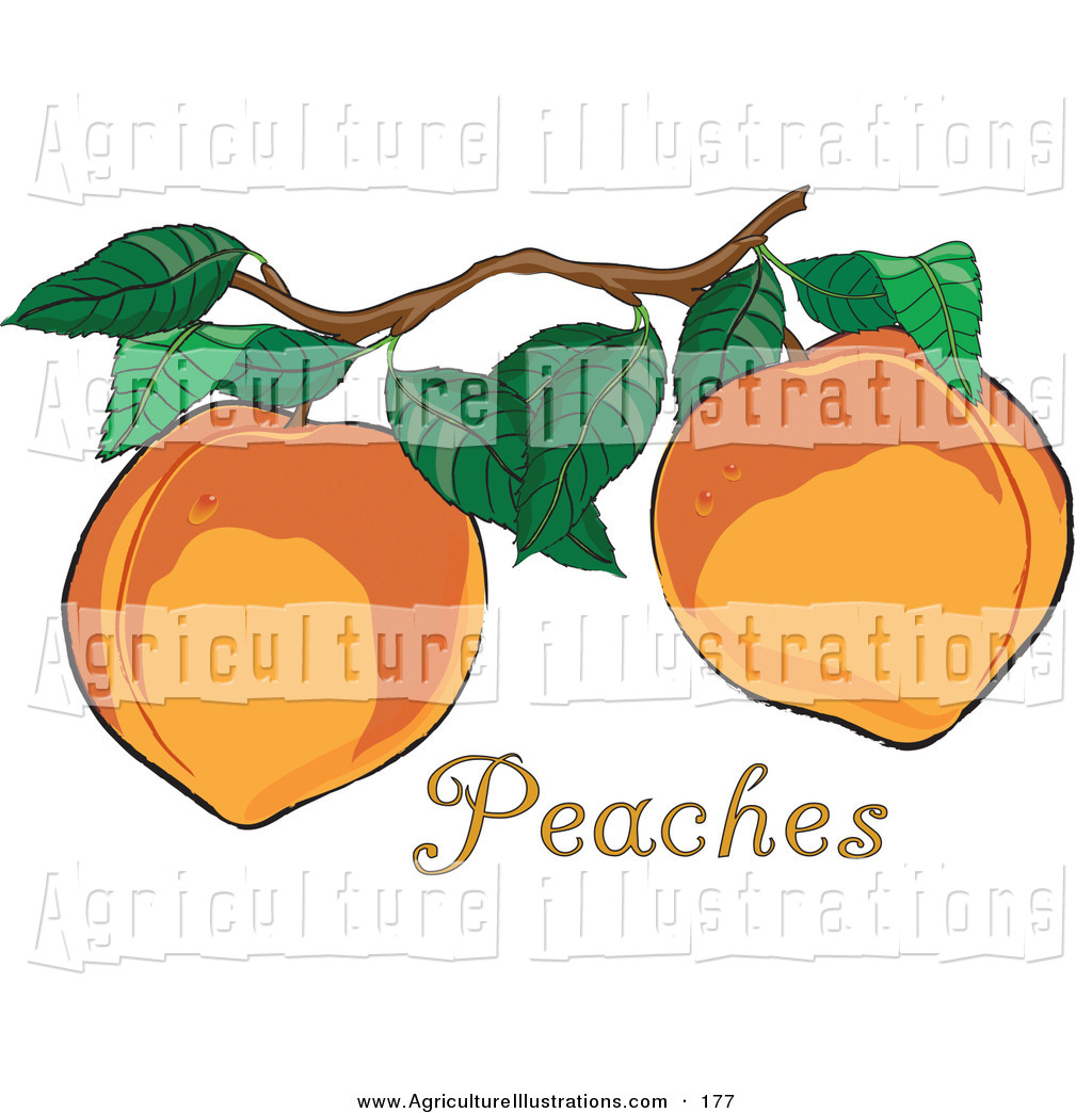 Agriculture Clipart of a Two Fresh and Organic Delicious ... clip royalty free