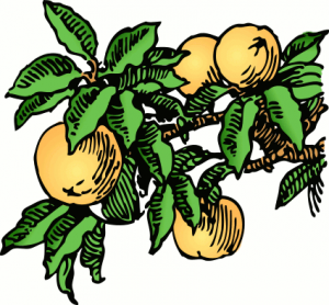 Peaches Cliparts | Free download best Peaches Cliparts on ... image freeuse download