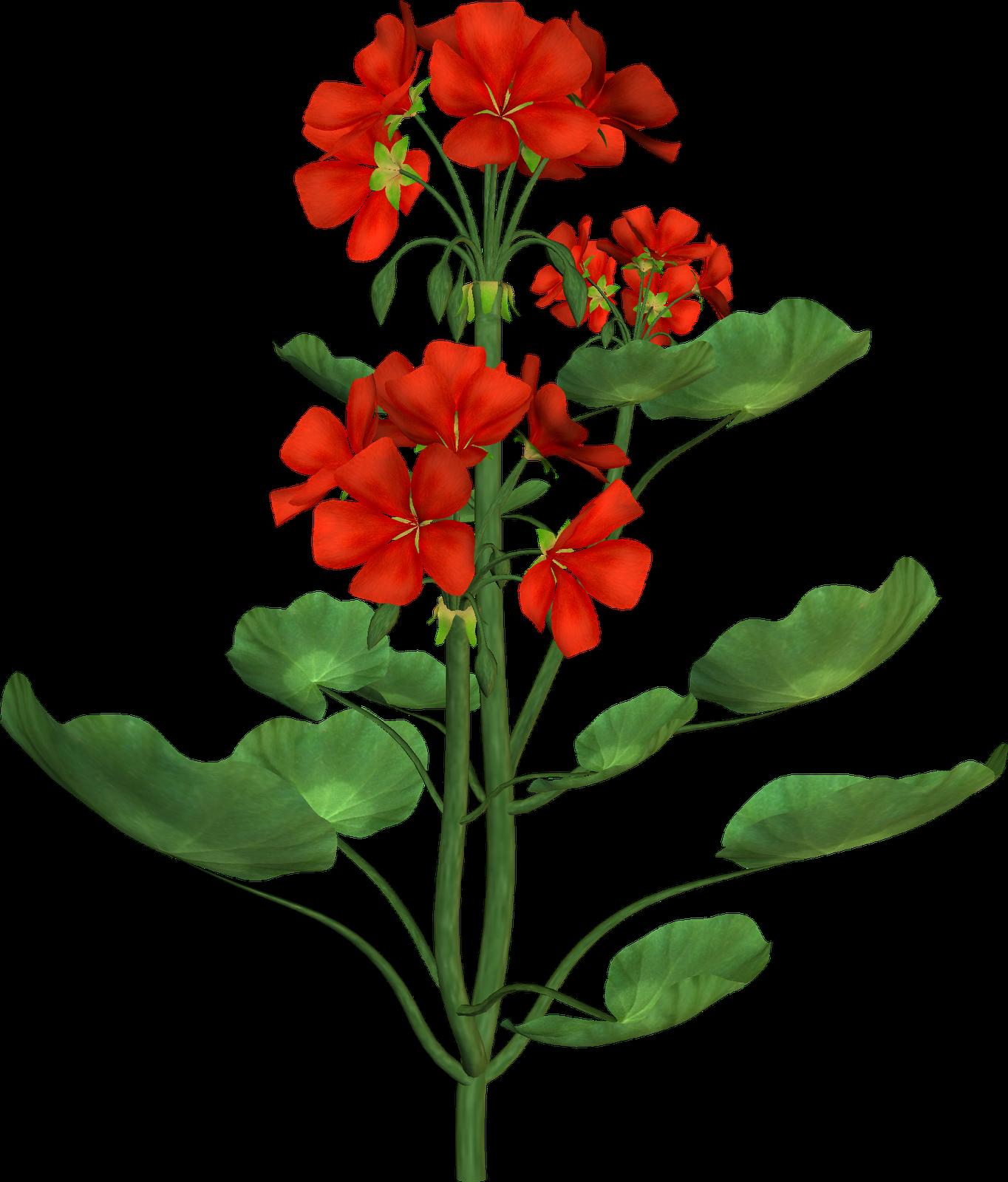 Tree seed clipart clip art Flower Botanical illustration Botany Clip art - flower tree 1364 ... clip art