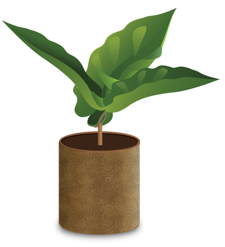 Tree seedling clipart image freeuse download How Coffee Grows image freeuse download