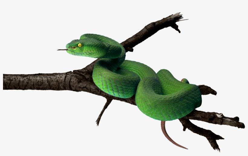 Tree snake clipart clip library stock Tree Snake Clipart Snake Tongue - Tree Snake Png - Free ... clip library stock