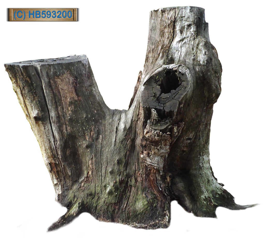 Tree stumps clipart picture free stock Tree Stump 002 - HB593200 by hb593200 on DeviantArt picture free stock