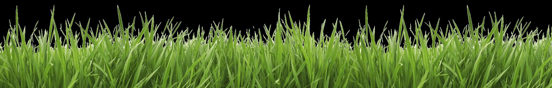 Tree sun grass landscape clipart image library PRO EDGE LAWN CARE LLC image library
