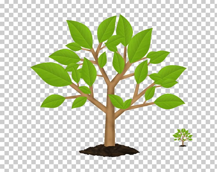 Tree Symbol Green PNG, Clipart, Branch, Clip Art, Decoration ... svg transparent stock
