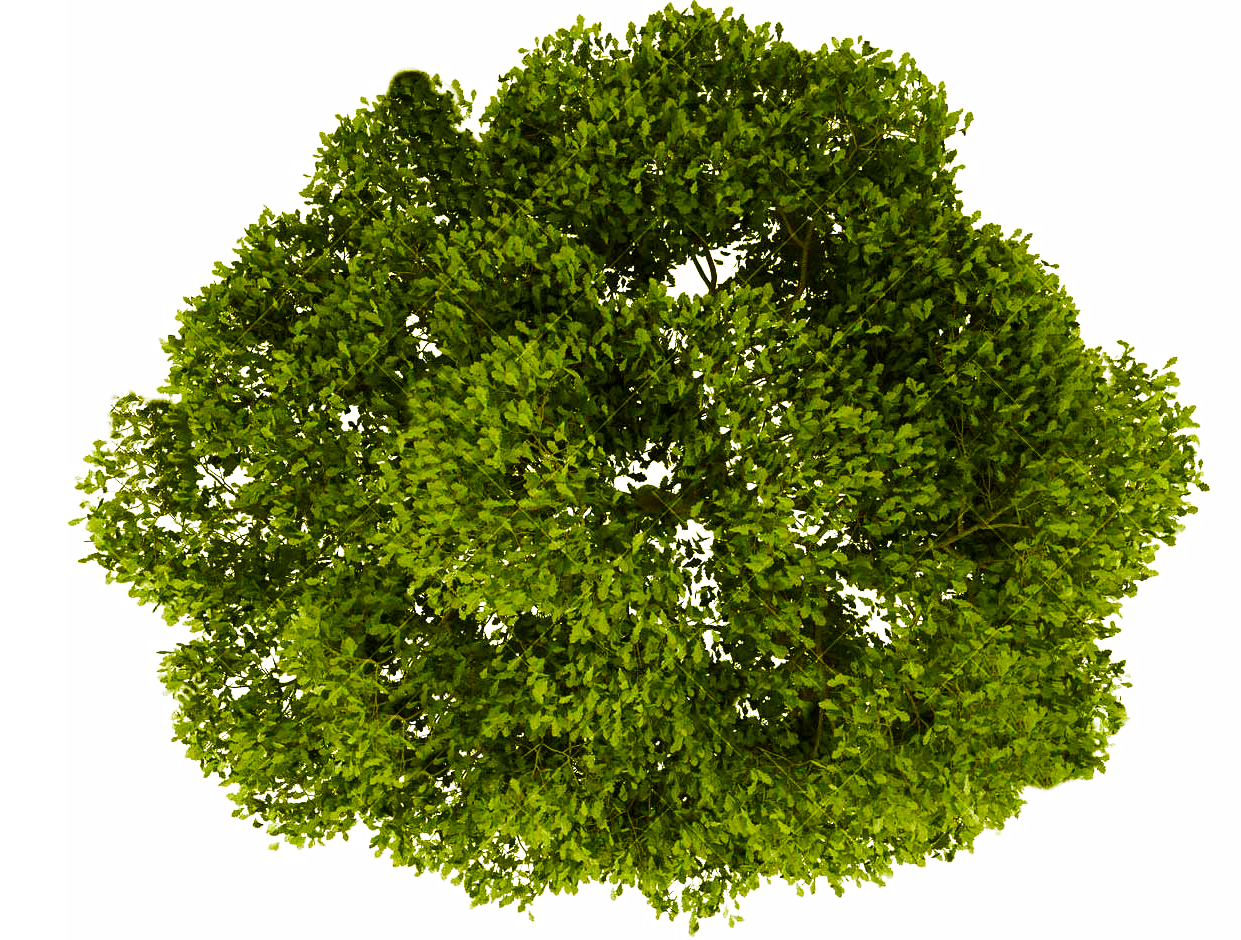 Tree top view clipart for photoshop jpg library library Pin by Arqui Guate on vegetacion   Trees top view, Oak tree ... jpg library library