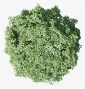 Tree top view clipart for photoshop banner transparent stock Trees For Photoshop PNG Images   PNG Cliparts Free Download ... banner transparent stock