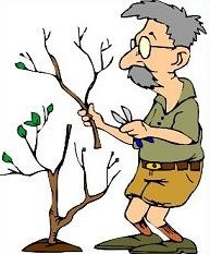 Tree trimmer clipart png transparent stock Tree pruning clipart 3 » Clipart Portal png transparent stock