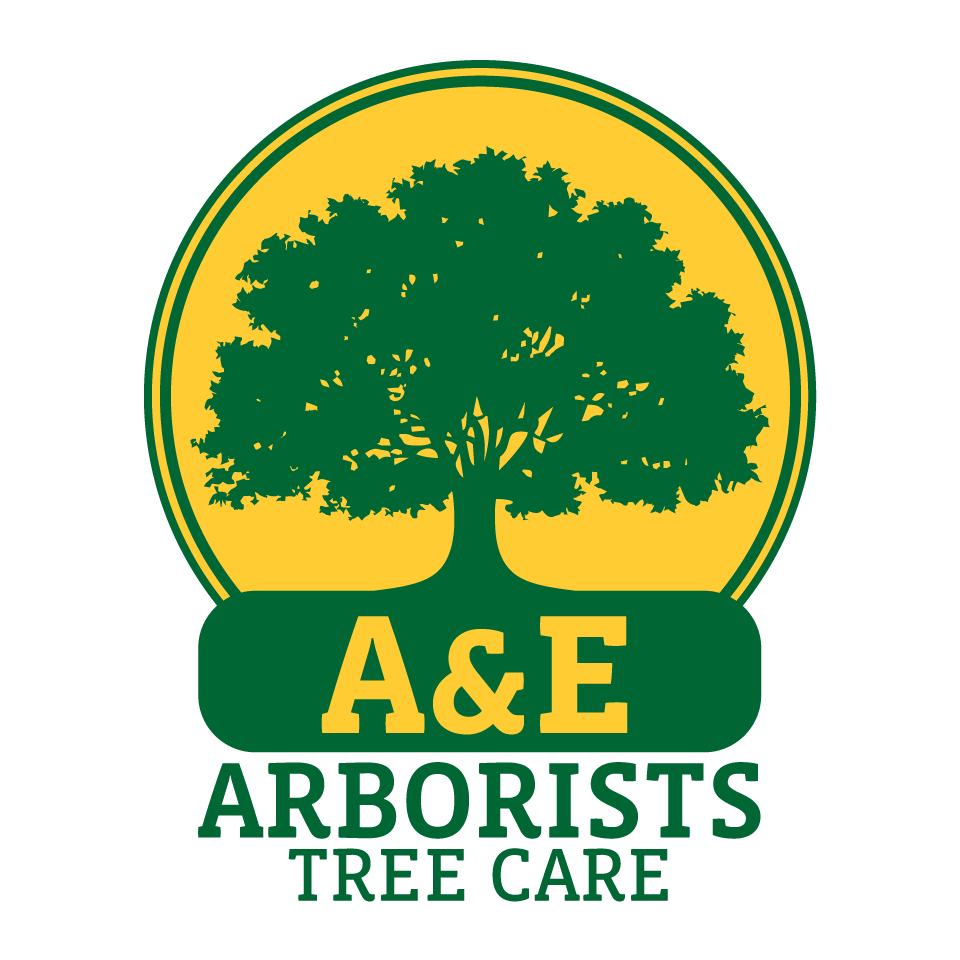 Tree trimming clipart jpg free Certified Arborist | Expert Tree Service | Tree Removal & Tree Trimming jpg free