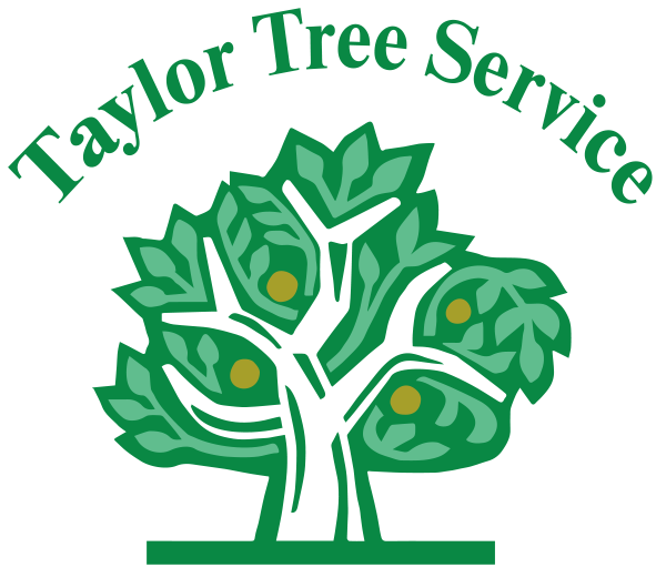 Taylor Tree Service | Tree Removal, Stump Grinding, & Tree Trimming ... banner transparent