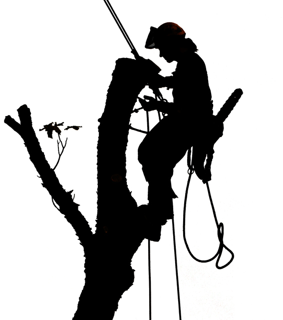 Climbers Tree Service Clipart - Free Clipart clip black and white library