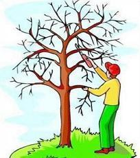 25+ Landscaping Tree Trimming Clip Art Pictures and Ideas on ... image transparent stock