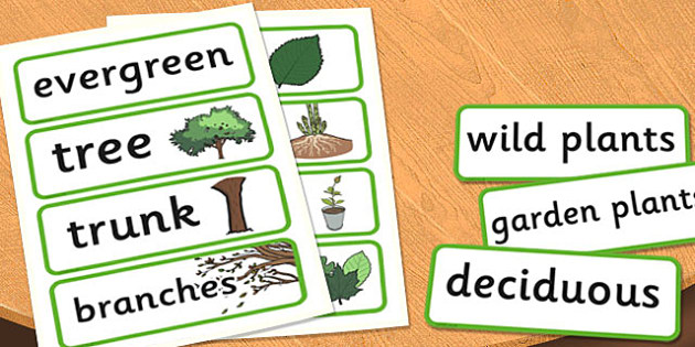 Tree trunk clipart space for a vocabulary word banner freeuse Year 2 Plants Scientific Vocabulary Cards - words, word, science banner freeuse