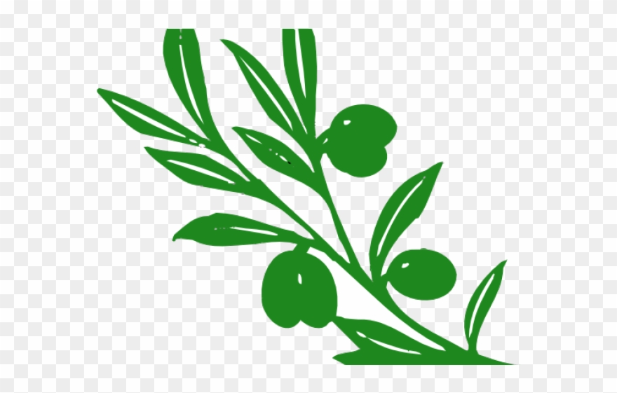 Tree vines clipart banner transparent download Vines Clipart Olive Green - Olive Tree Branch - Png Download ... banner transparent download