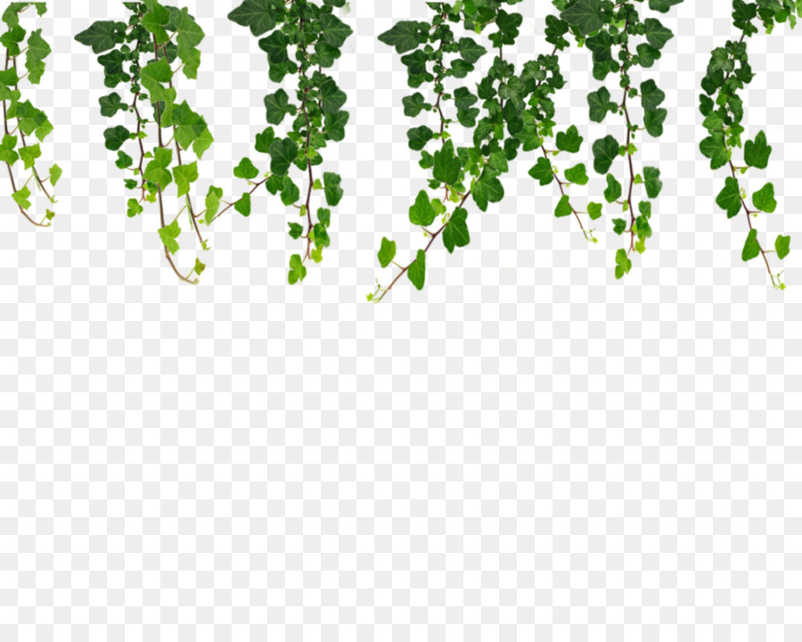 Tree vines clipart image stock Family Tree Background png download - 999*799 - Free ... image stock