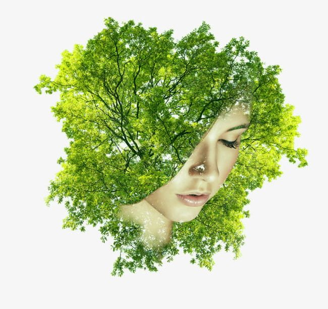 Tree with a face clipart jpg download By Trees Covered Half Of His Face Female Head PNG, Clipart ... jpg download
