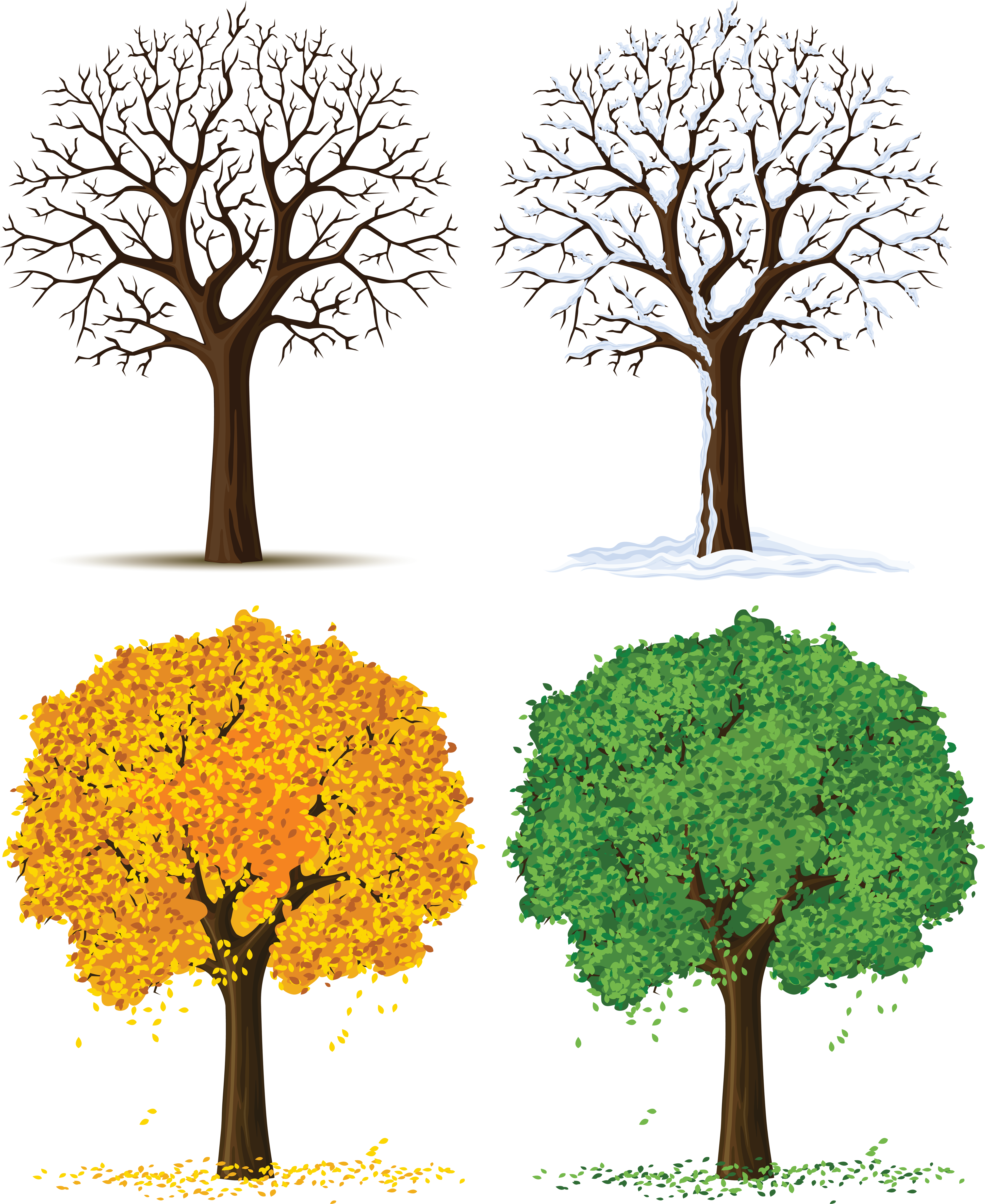 Season tree clipart clip black and white stock Tree with seasons clipart - ClipartFest clip black and white stock